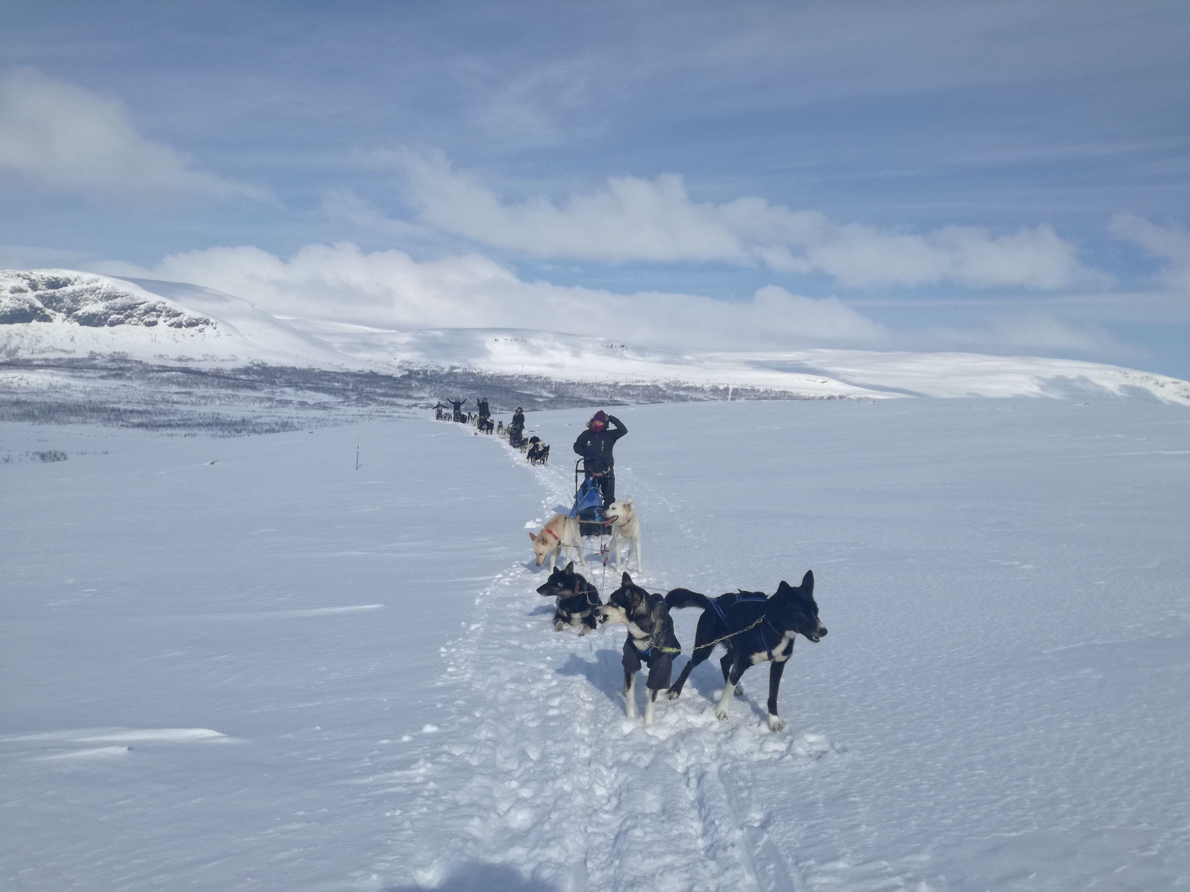 Hundesledetur i Lyngen - Dagtid - Lyngen Outdoor Experiences