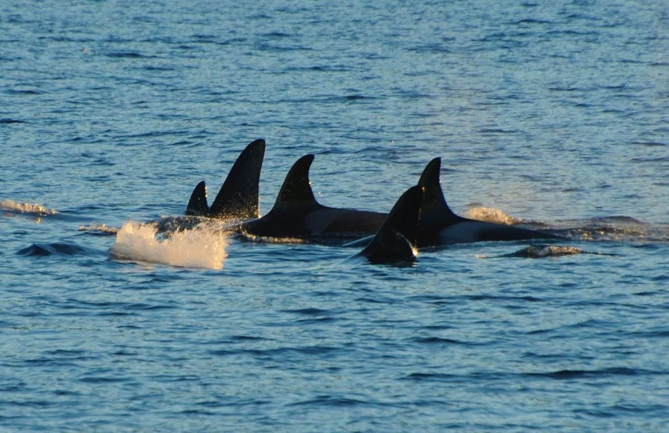 Hval og natur cruise - Arctic Whale Tours