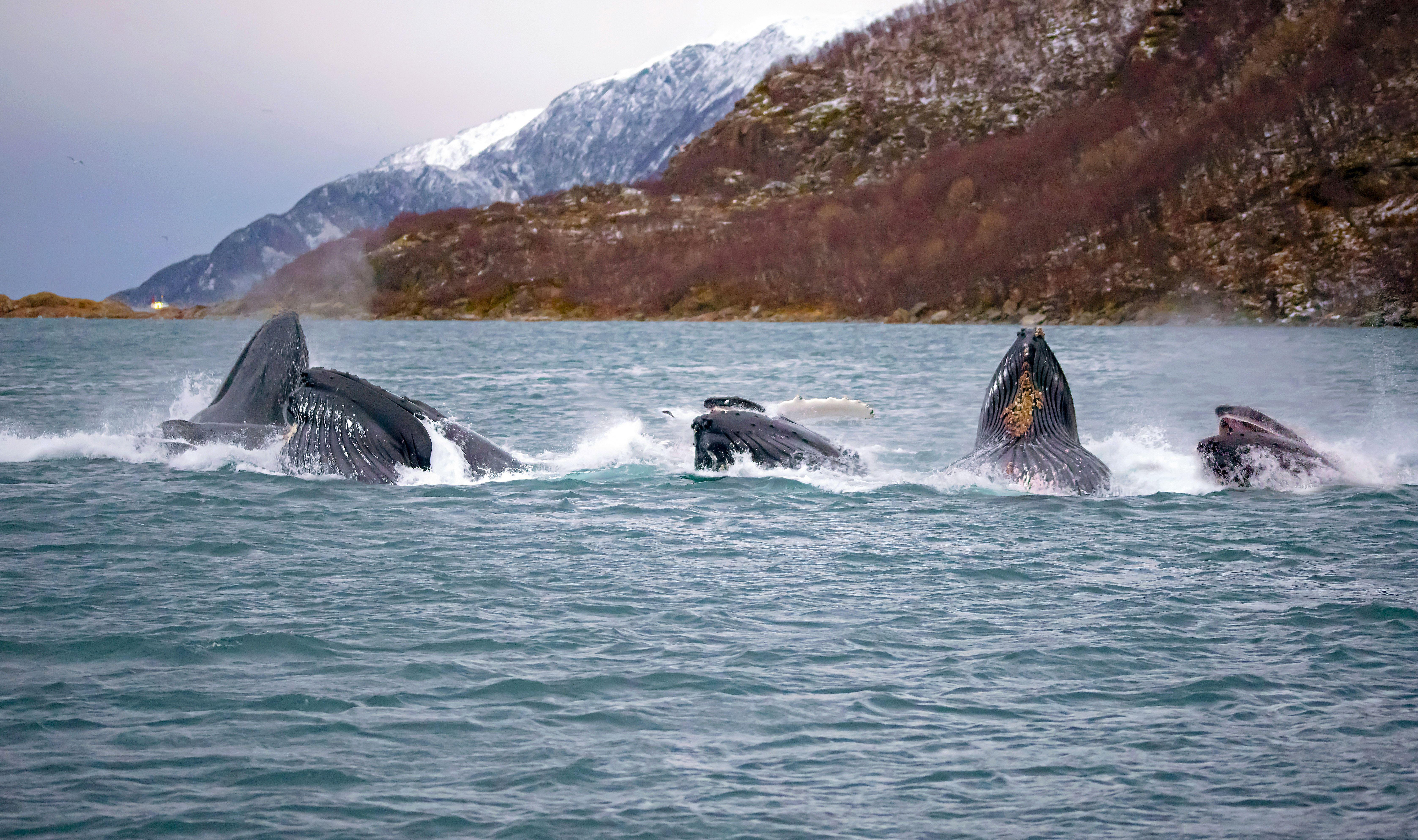 Arctic Whale and Wildlife Safari - Arctic Whale Tours