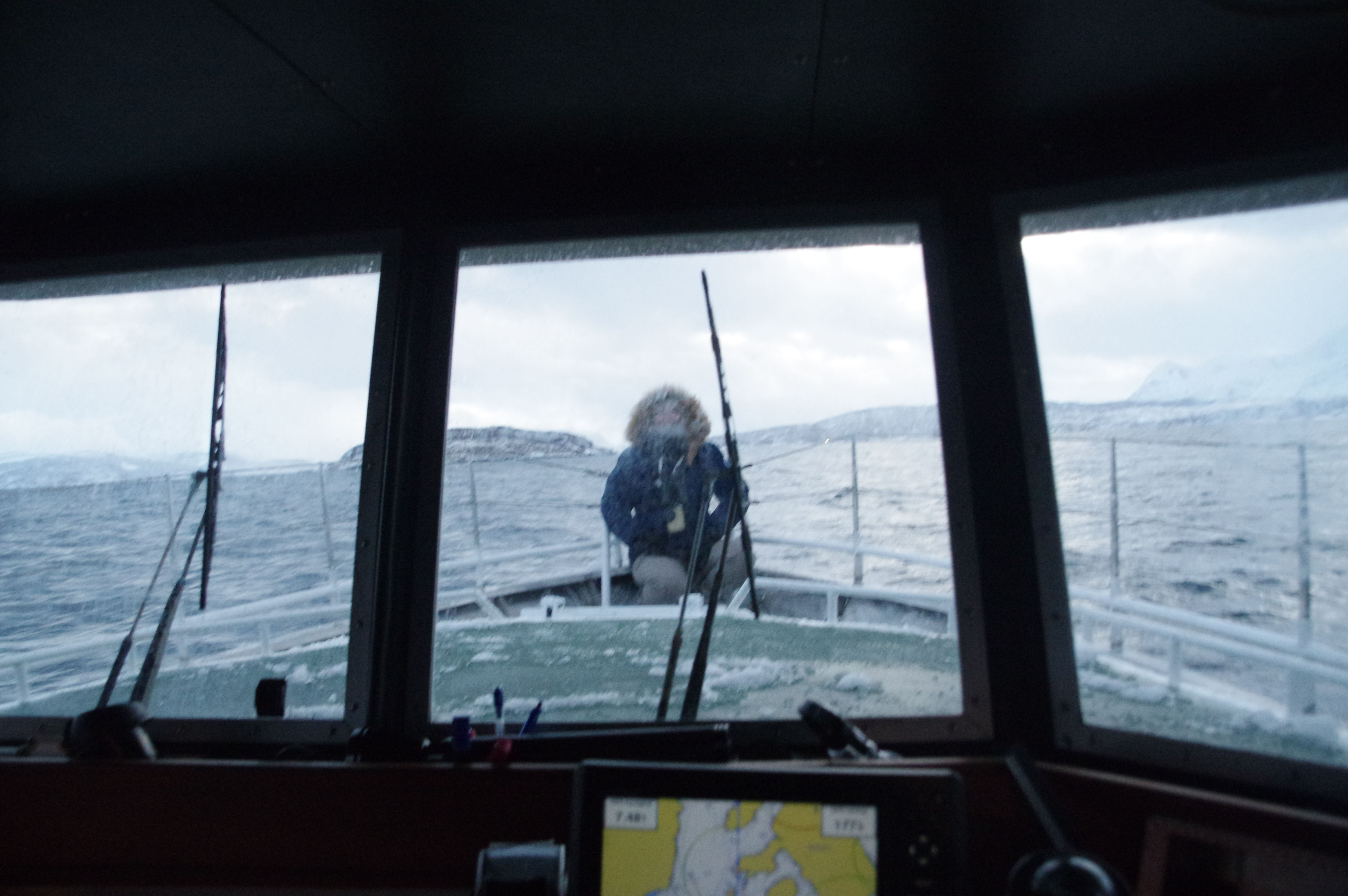 Whale Watching trip with MS Senjafjell – Solbø Maritime Adventure