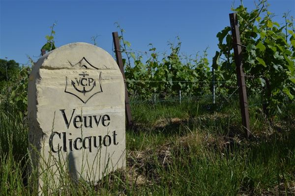 Excursion privative en Champagne