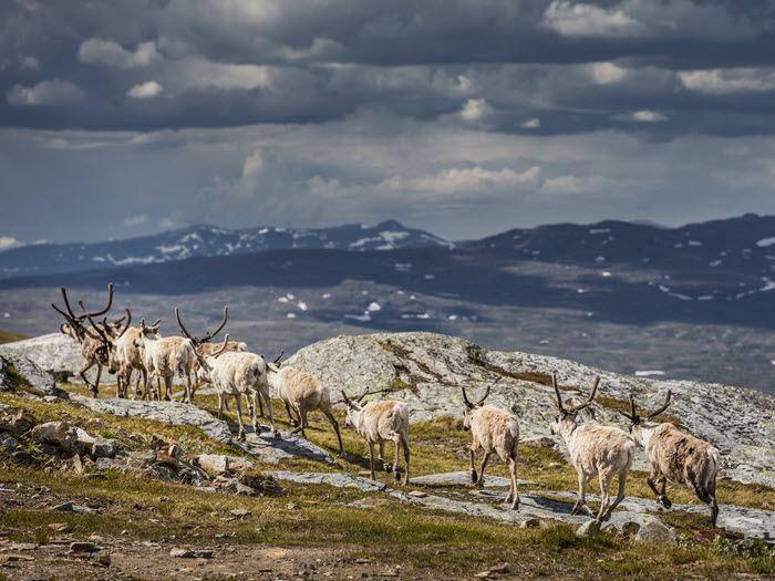 Nationalparkstur i Laponia