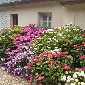 BED AND BREAKFAST LES HORTENSIAS LA MEMBROLLE SUR CHOISILLE