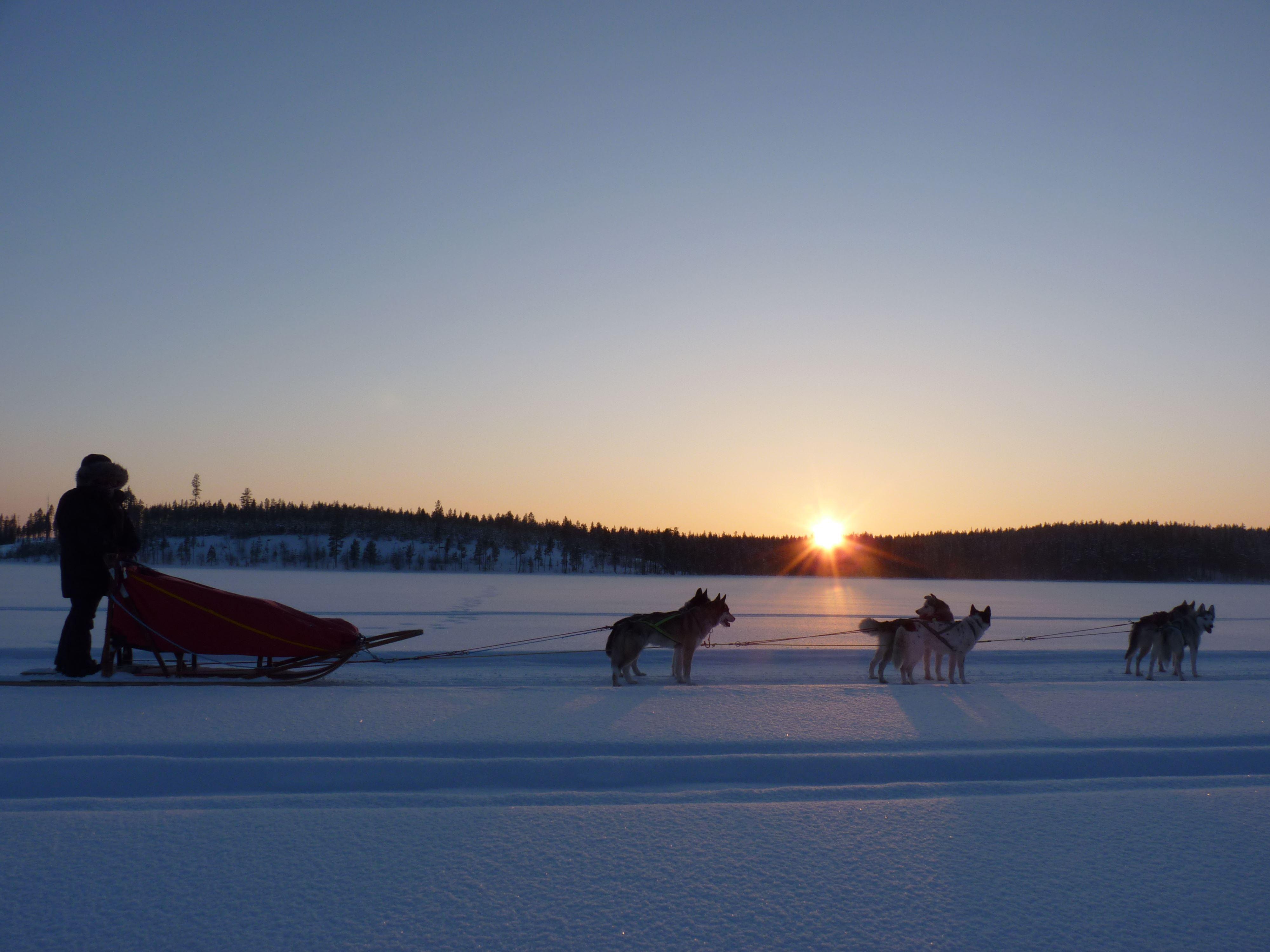 Schlittenhundetour für Alle, Aurora Borealis Adventure