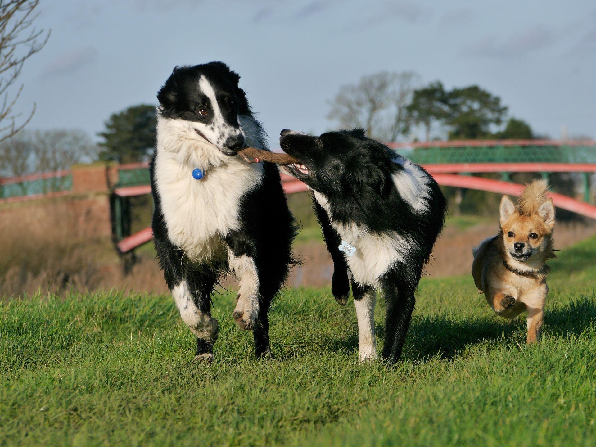Freestyle och HTM med hund