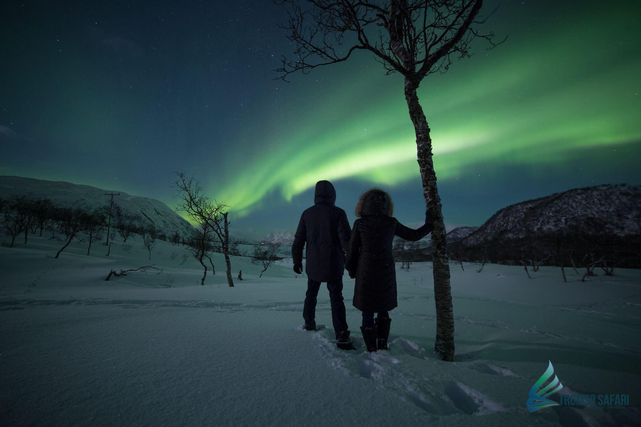 Privat Nordlyssafari (maks. 3 personer) - Tromsø Safari