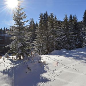 2 rooms 4 people ski-in ski-out / Domaine du Jardin Alpin 306A (mountain)