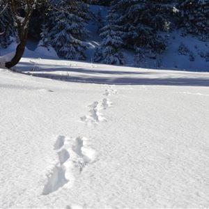 2 pièces 4 personnes skis aux pieds / Domaine du Jardin Alpin 306A (montagne de rêve) / Séjour Sérénité
