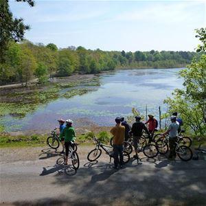 Bicycle safari