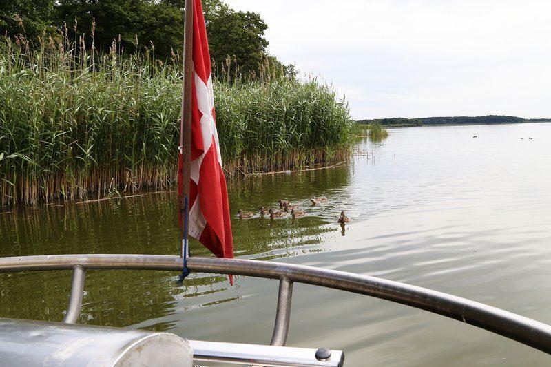 Non-Stop med Turbåden Anemonen