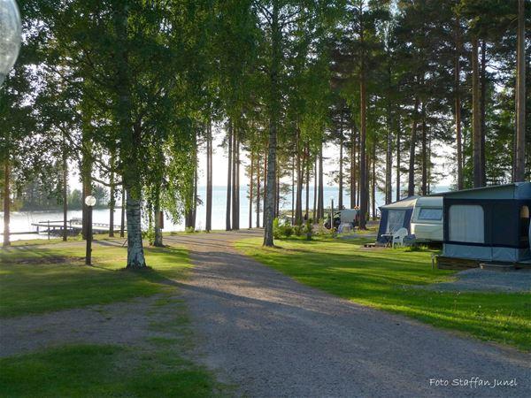 Grusväg på campingområdet med vattnet som skymtar bakom tallarna.