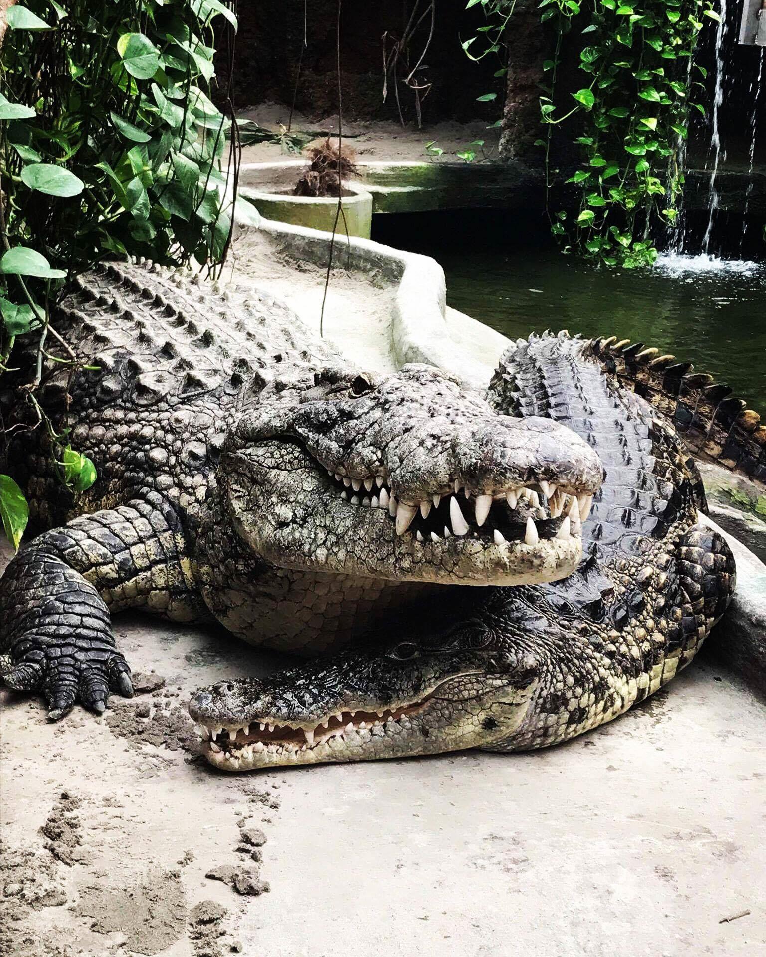 Indgangsbillet til Krokodille Zoo på Falster
