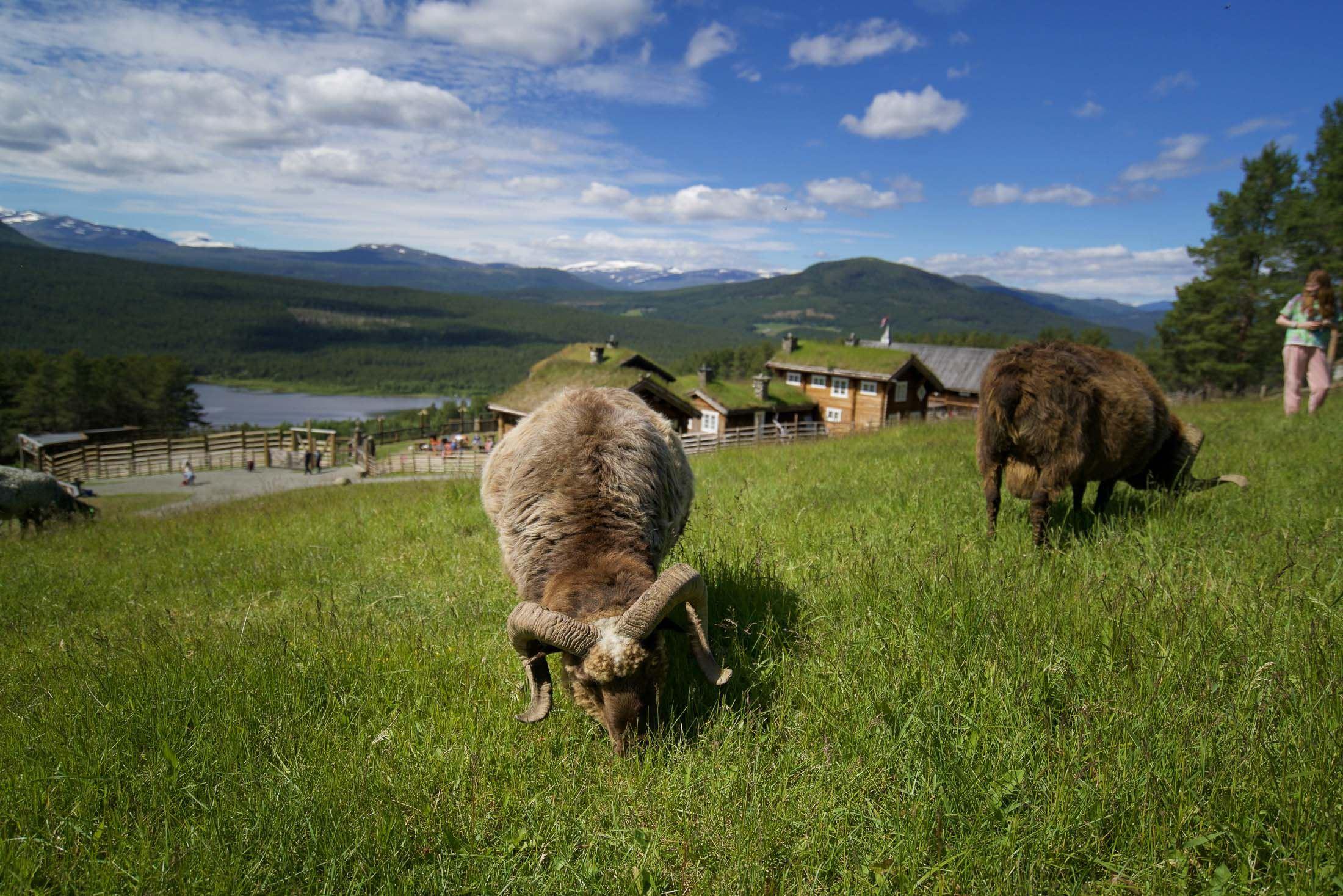 Foto: Erland Husom / Nasjonalparkriket