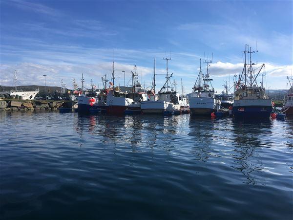 Fiskebåter som ligger i havna i nydelig solskinn.