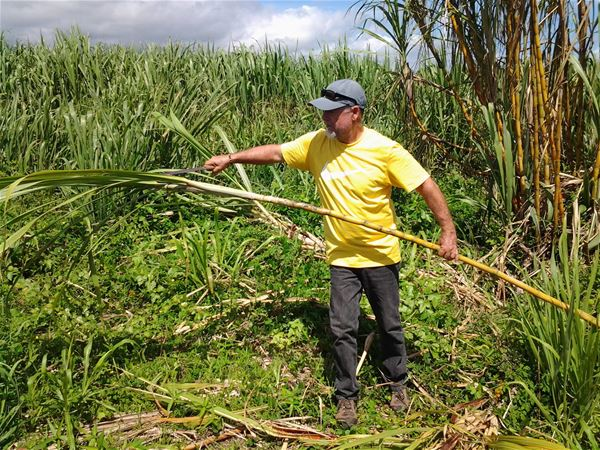 Cultural day - from cane to sugar