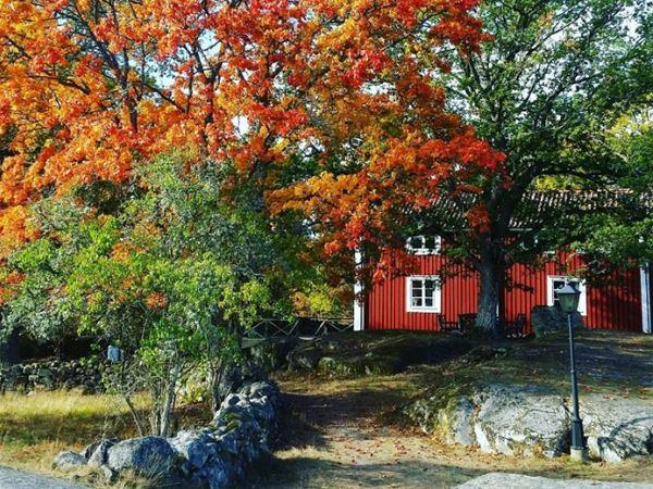 Trähus och stora ekar