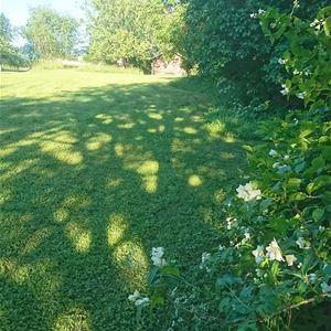Trädgården vid Lärkastugan, Sollerön.