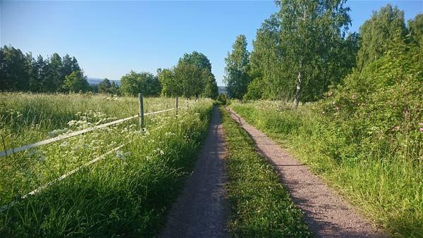 Vägen som leder till Lärkastugan.
