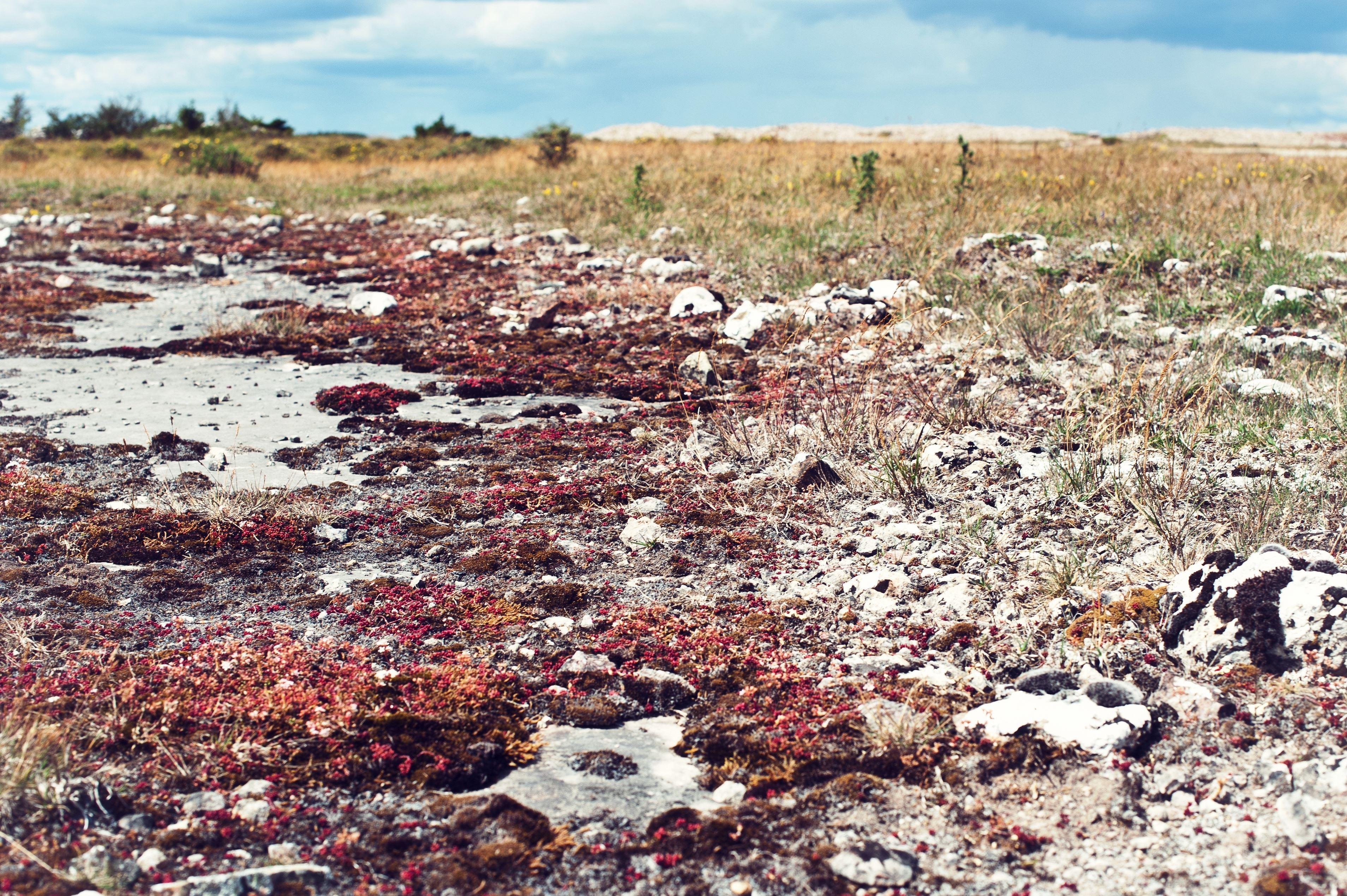 Matvandring i världsarvet – Södra Ölands Odlingslandskap.