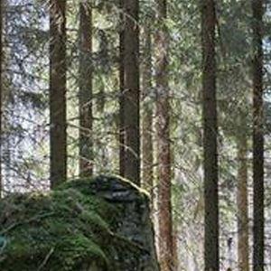 Metsäpirtti | Pätiälän kartanon lomamökit