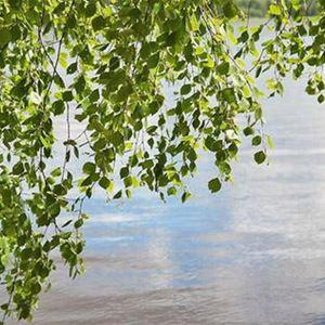 Joutsenlahti | Pätiälän kartanon lomamökit