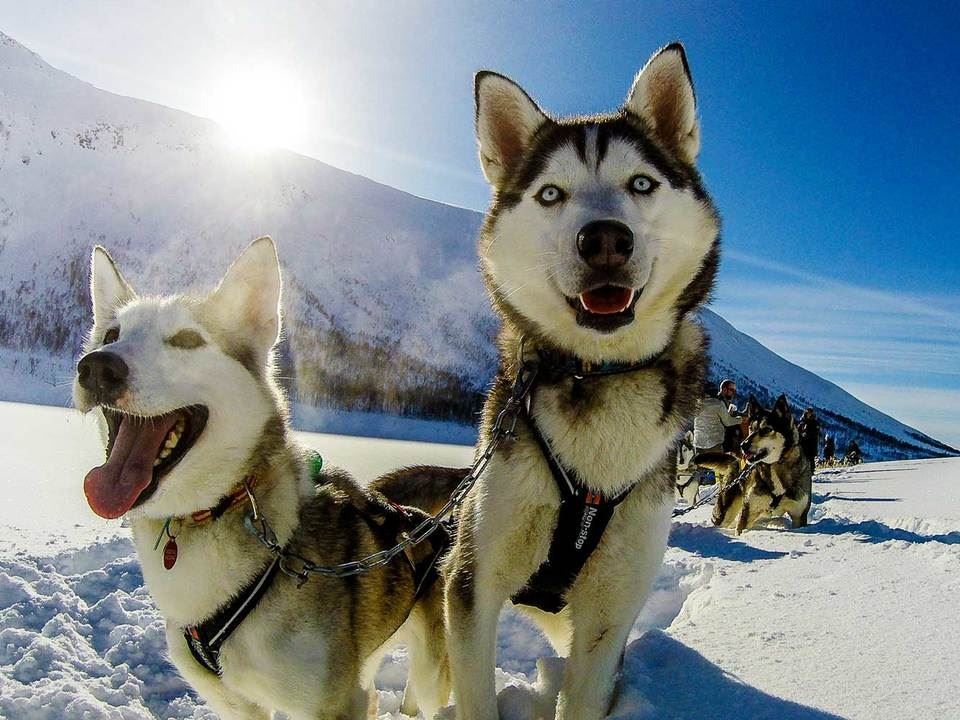 Foto; Jamie Sharp, Senja Husky Adventure
