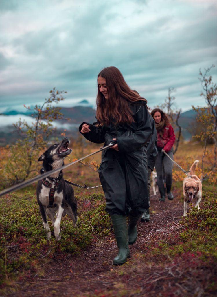 Vandretur med Husky og Nordlyscamp - Tromsø Villmarkssenter