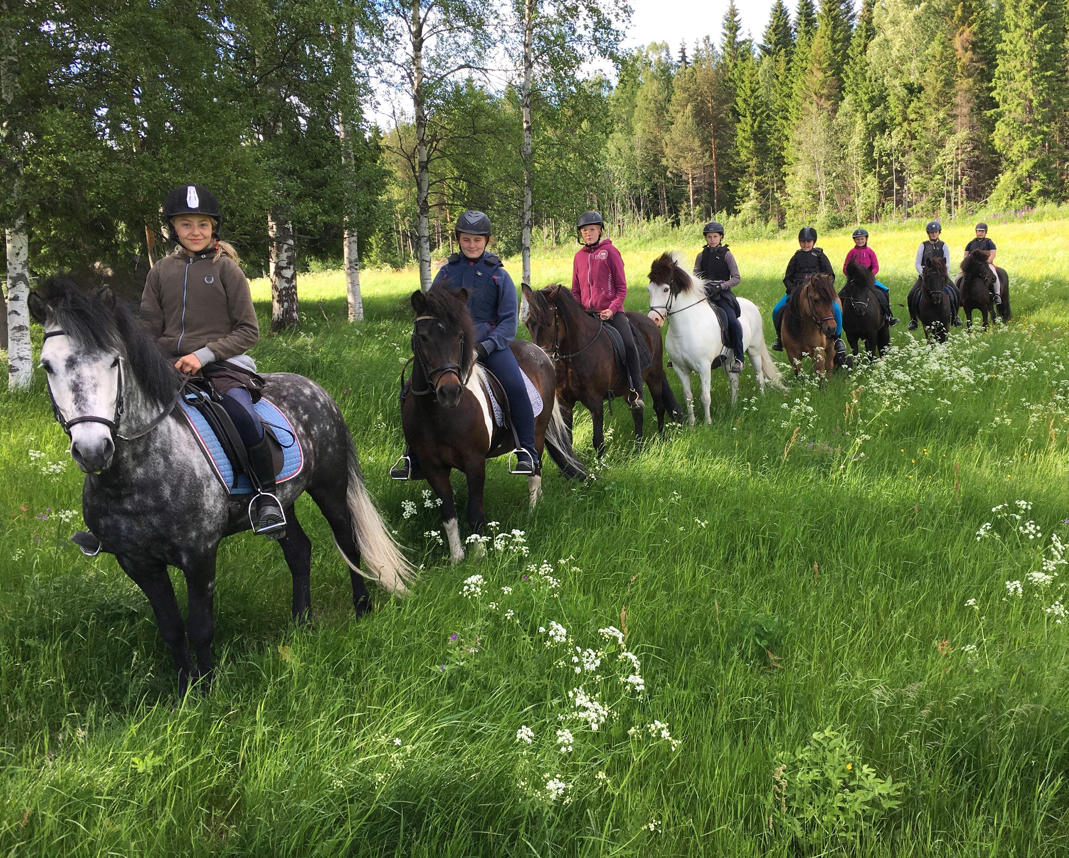 Heldags turridning på Islandshäst