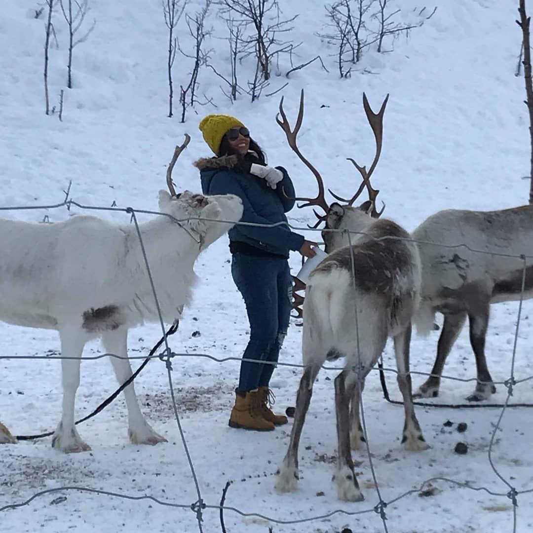 Reindeer feeding in SamiCamp