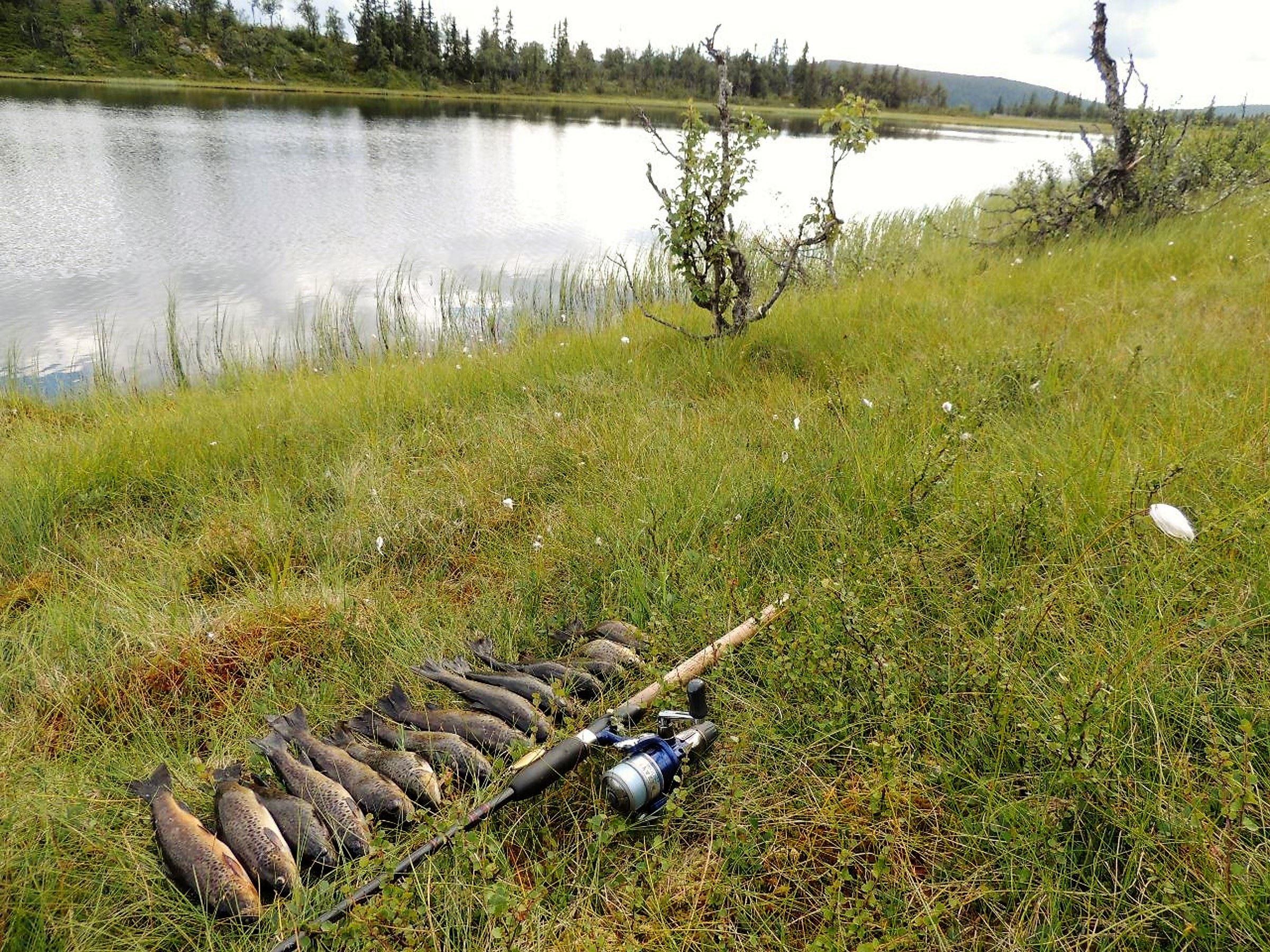 Fiske i Lillehammer, Mjøsa og Gudbrandsdalen