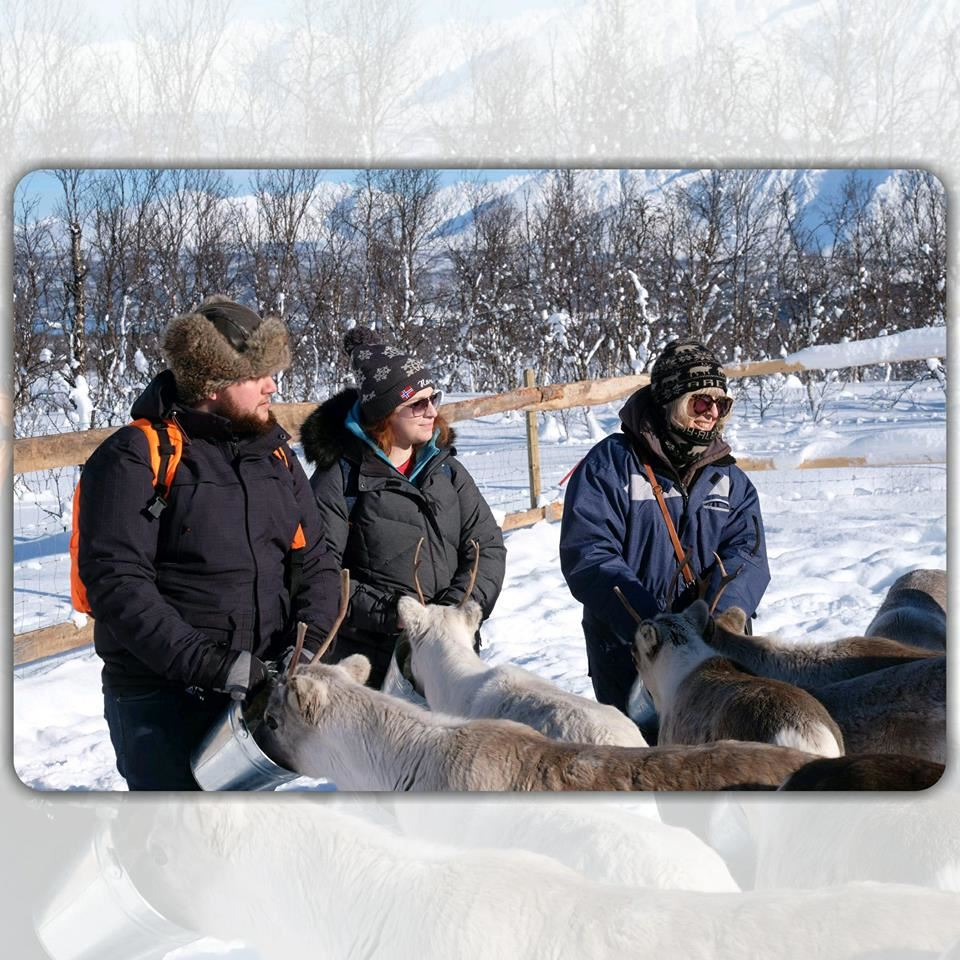 Sami Experience with Feeding Reindeer - small groups - Tromsø Lapland