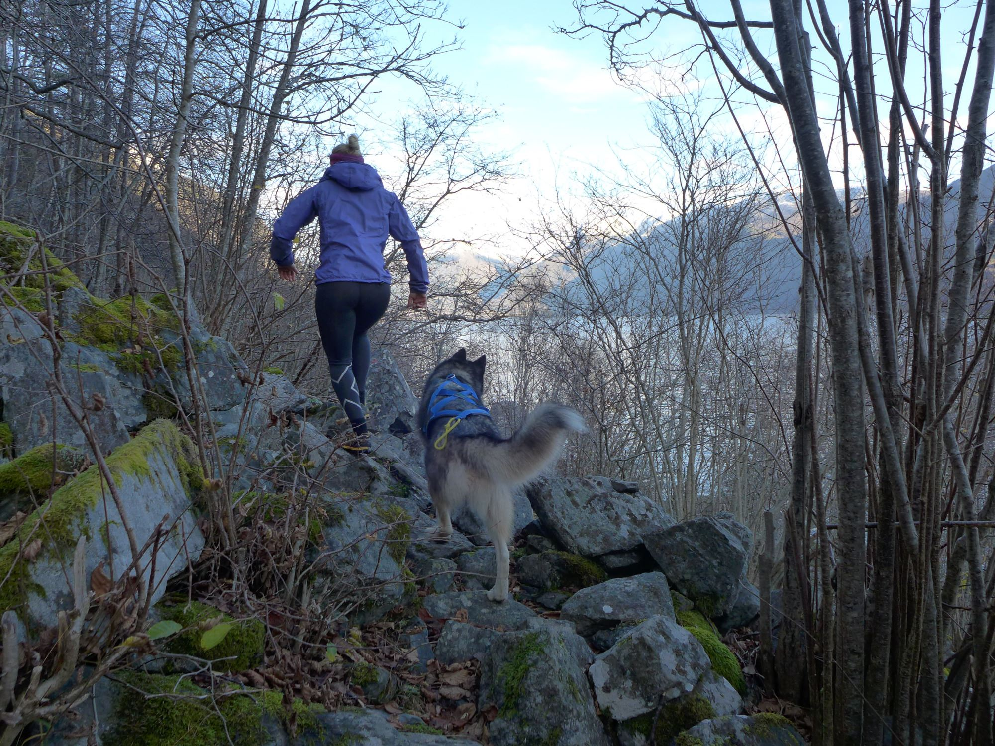Mountain running with husky - Bergbjørn Fjellservice