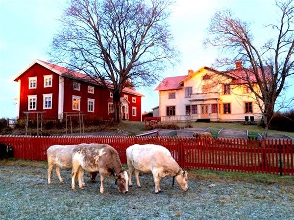 """Hälsingegården Per-Anders """"Lammkatedralen"""", Långhed"""