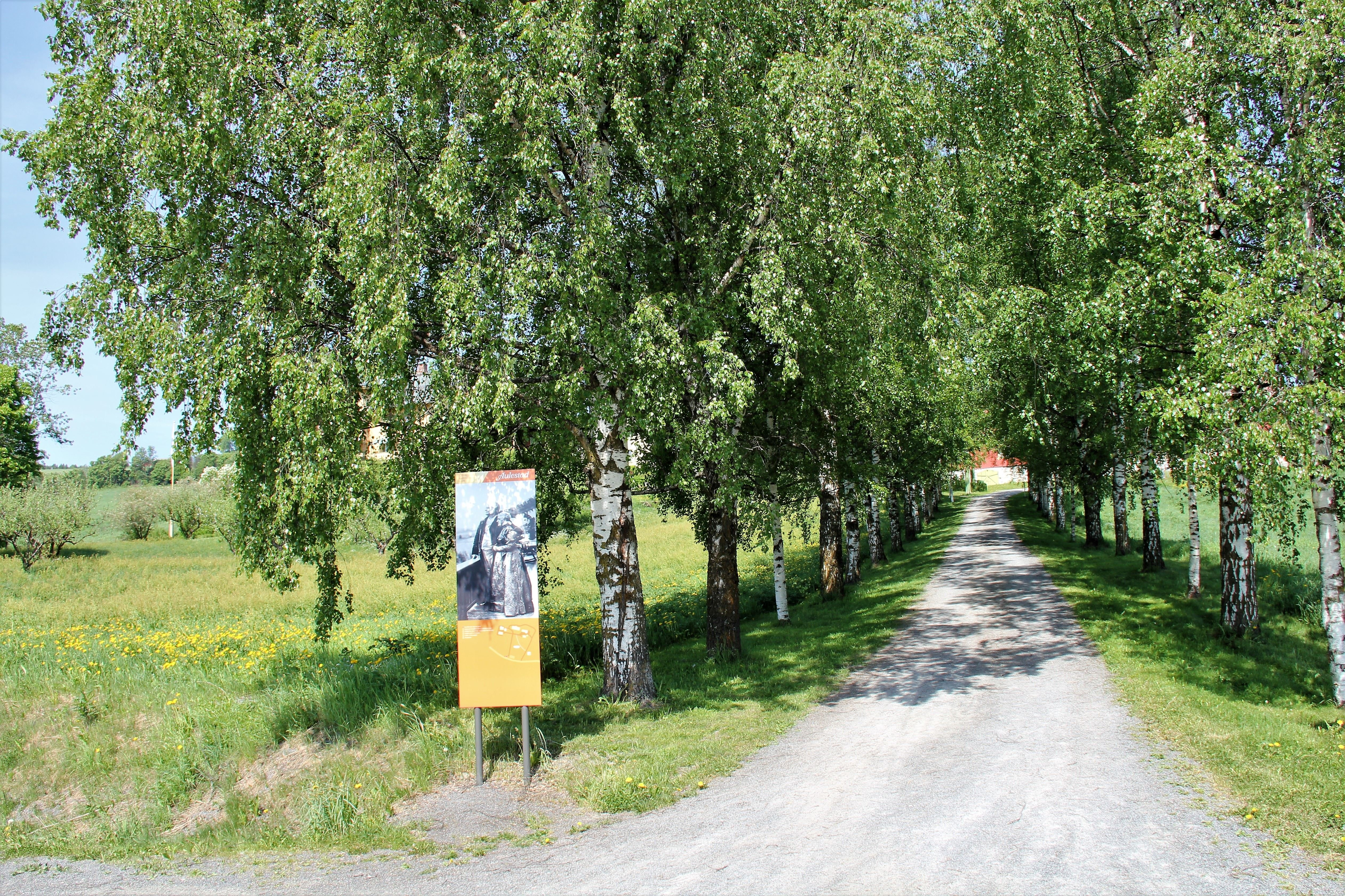 Bjørnsons road