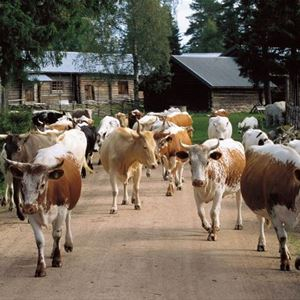 Kor på vägen.