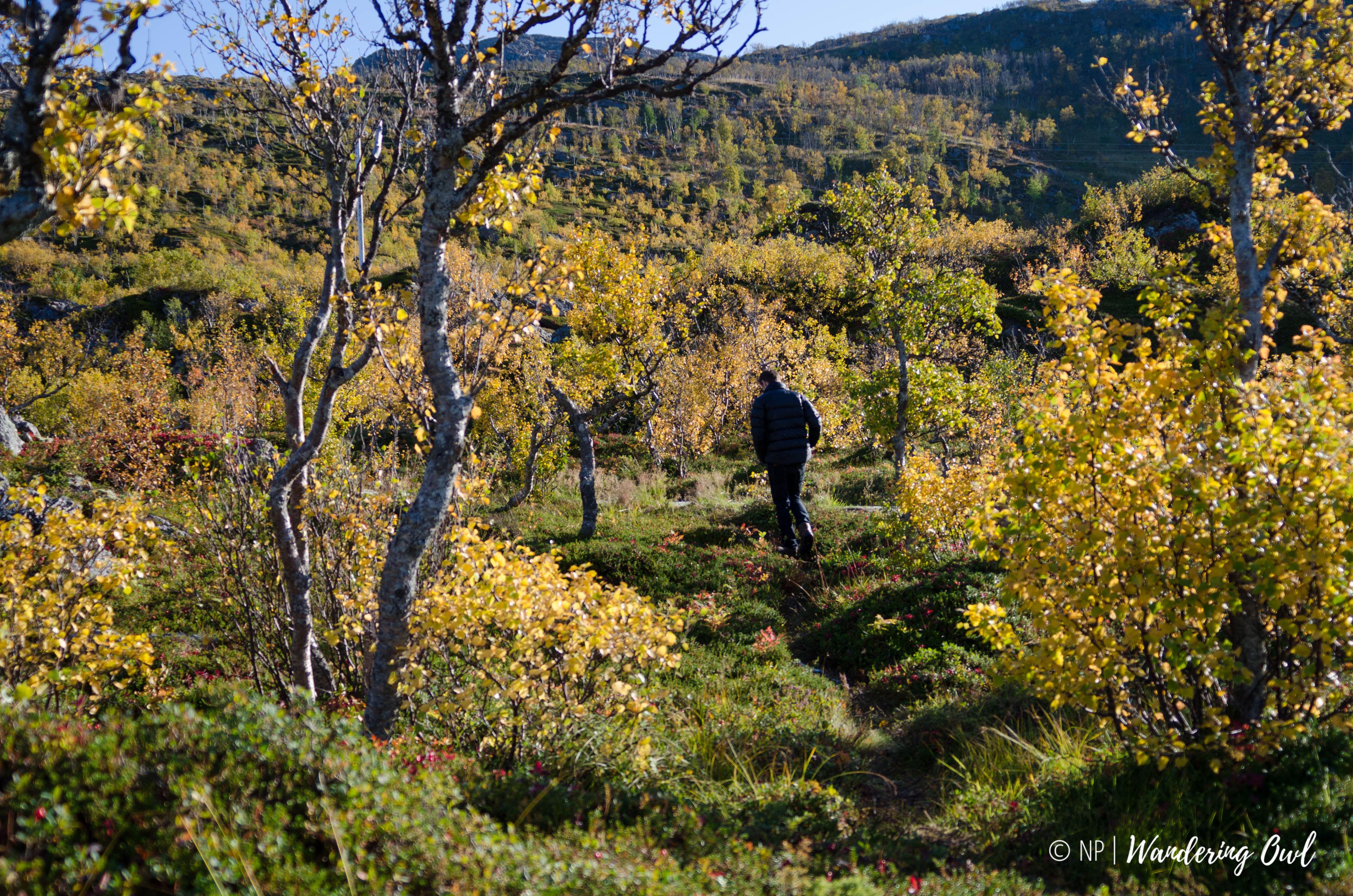 Take a Walk on the Wild Side – a hike on Kvaløya – Autumn - Wandering Owl