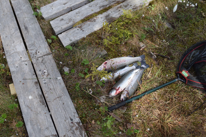 Fiska i Nydalasjön