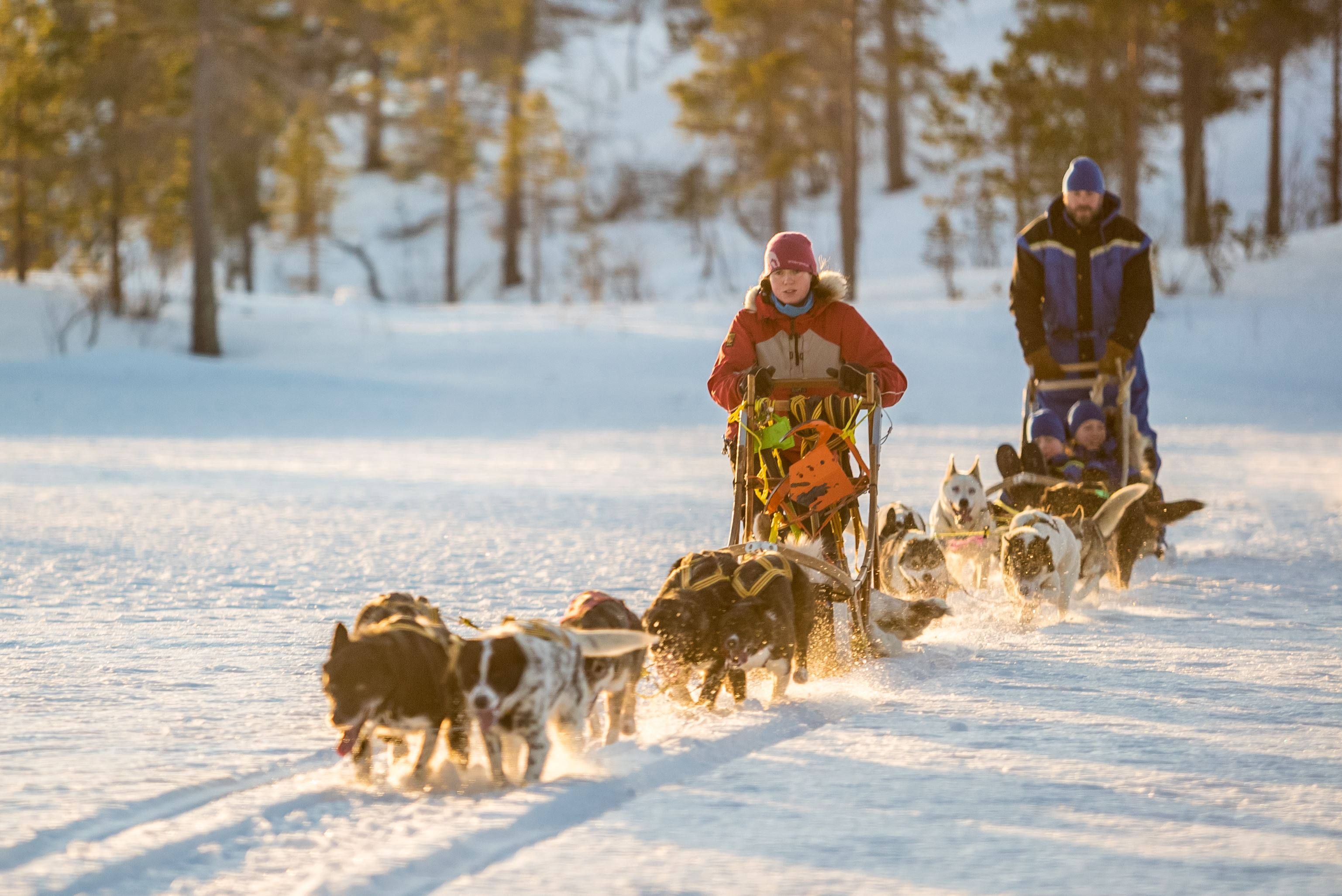 Dogsledding through the White Silence – Malangen Resort