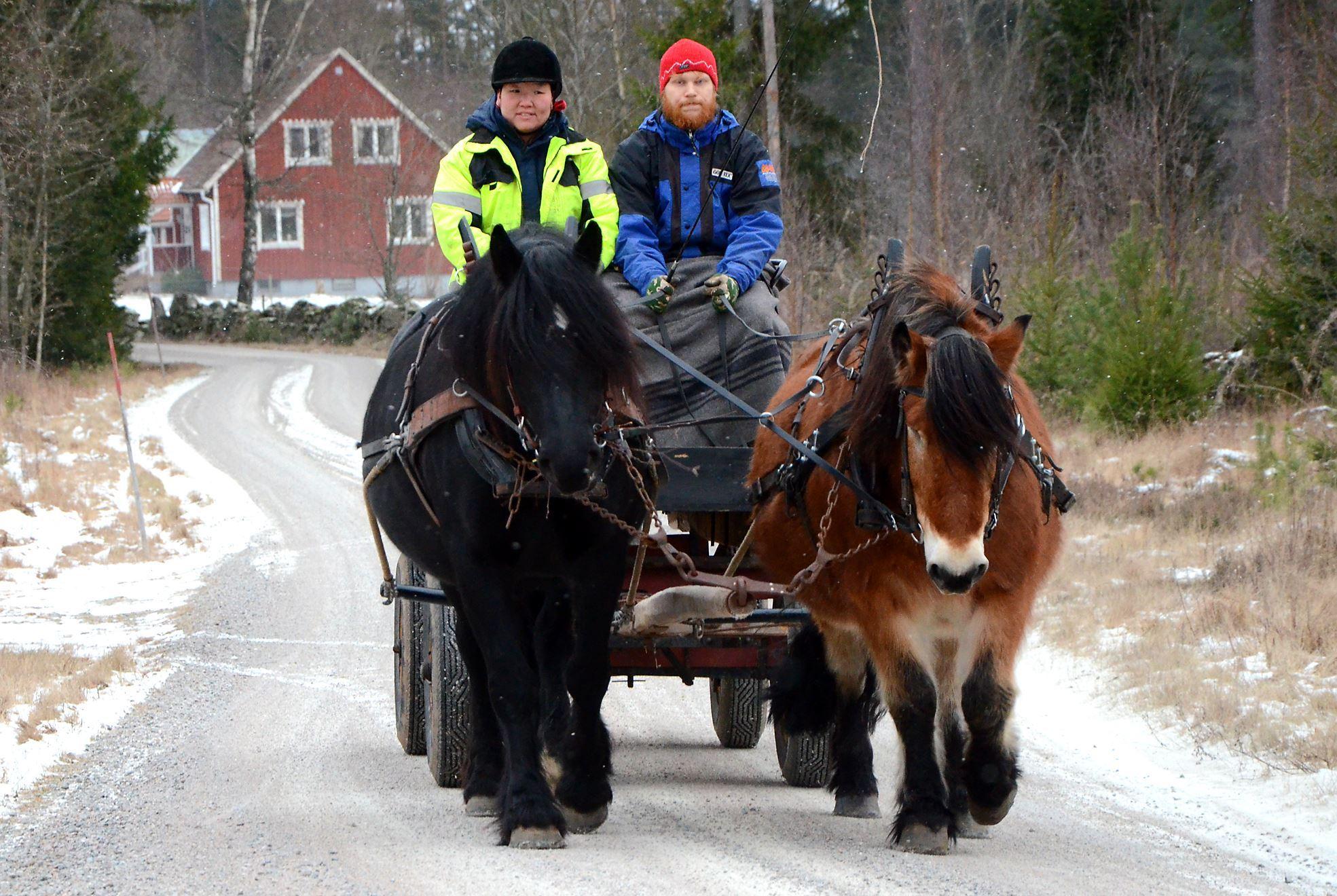 Horses: Fyrfota hästkraft - Tours with horse and carrige or sleigh