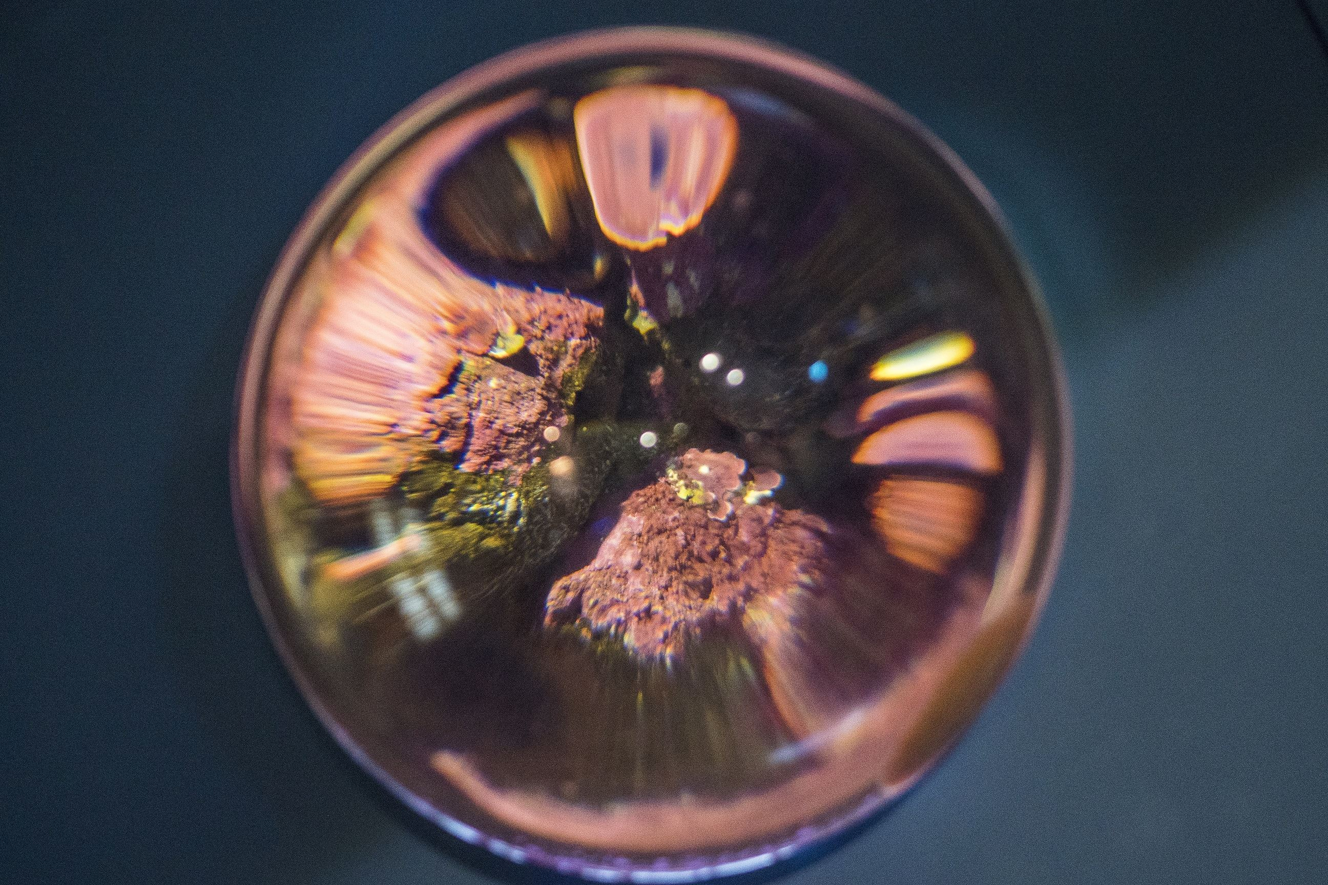 Årskort - Polaria