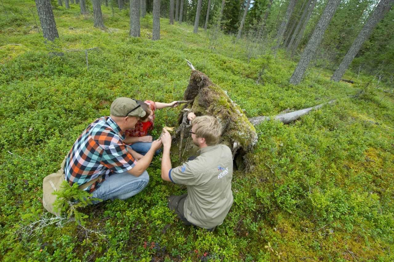 Hiking tours with Granö Beckasin