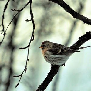 En liten fugl som sitter på en gren.