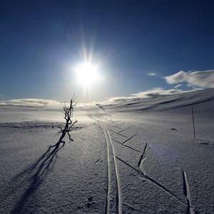 Fra skisporet på det snø fylte fjellet, er bildet tatt mot solen å den skyfrie, blå himmelen. Det står å en liten busk på venstre side av skisporet.