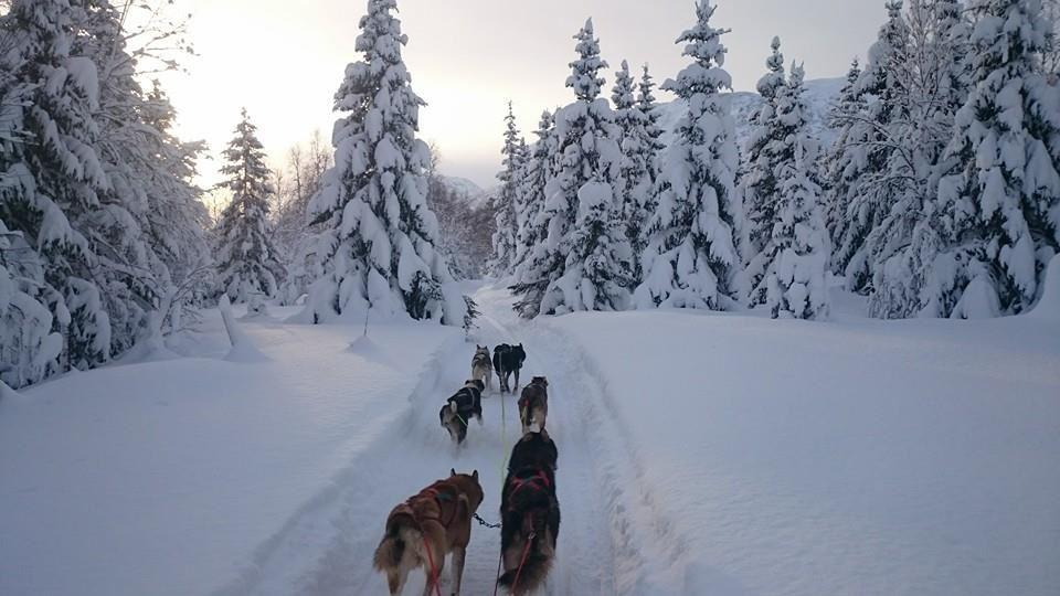 Røyeldalen Husky,  © Røyeldalen Husky, Hundesledeturer i Reisadalen – Riverland Husky