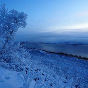 En snøfull fjære i varangerfjorden