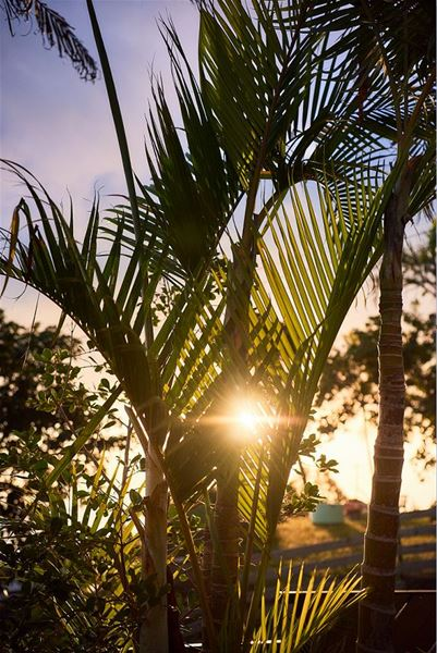 Bambou (Le)