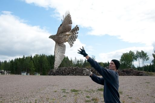 Heinolan Lintutarha Bird Sanctuary
