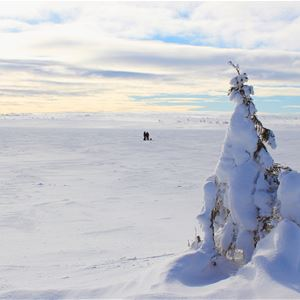 Rösjöstugorna Fulufjällets Nationalparkscamp