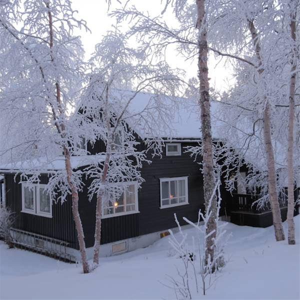 Birk Husky sitt hus i vinter lyset, fult med snø ute. Alle greinene er hvite av snø.