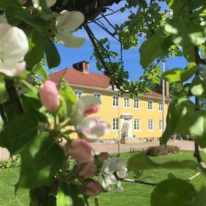 Träd med äppelblom i förgrunden och stor gul villa i bakgrunden.